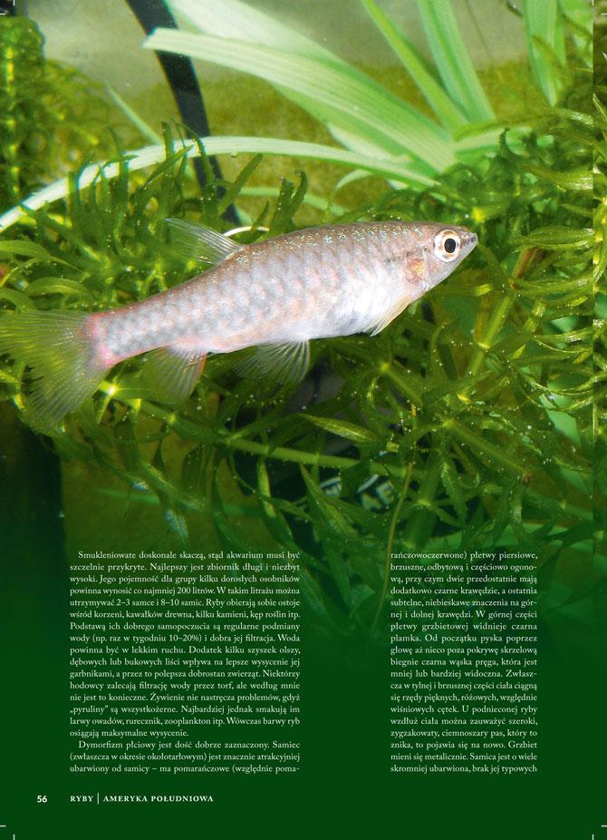 Skład Magazynu Akwarium
